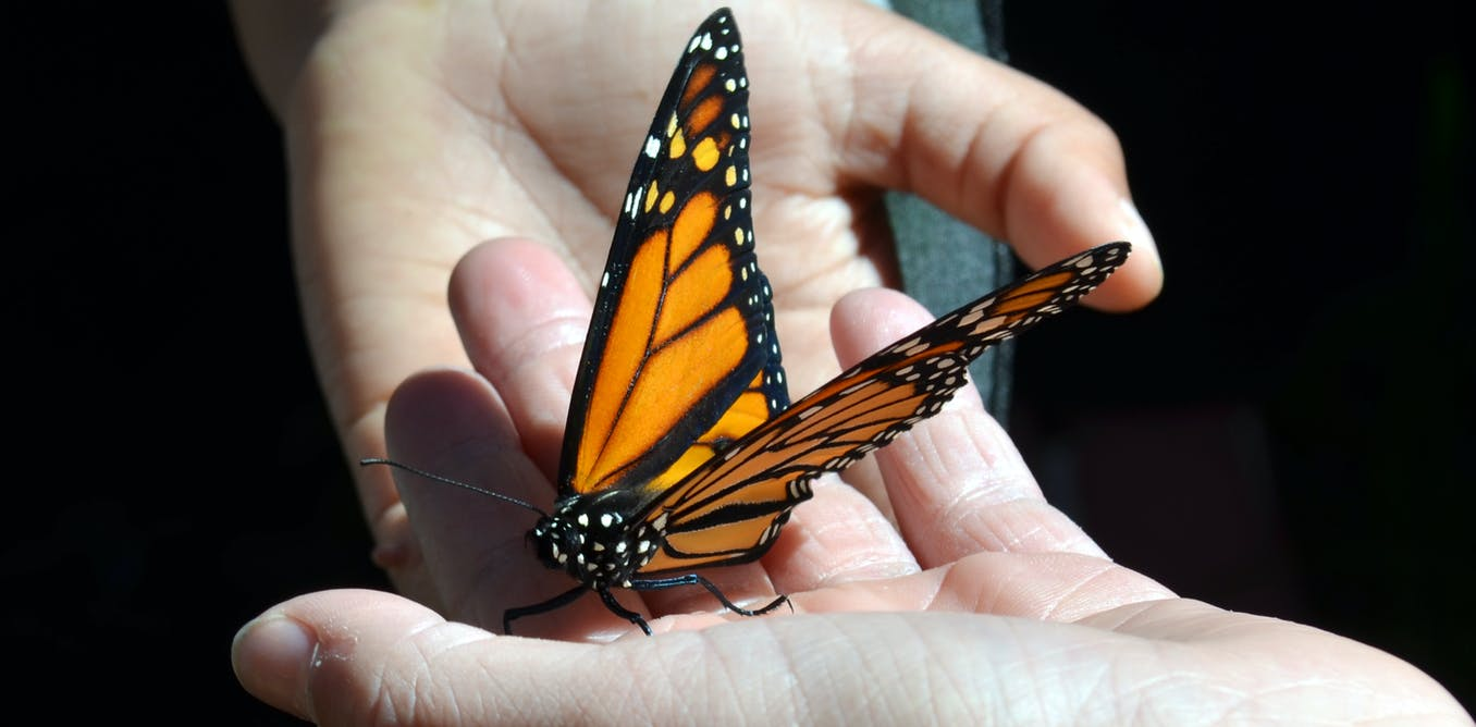 Butterfly lovers become citizen scientists by logging sightings on eButterfly