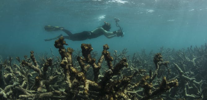 Coral Bleaching News Research And Analysis The
