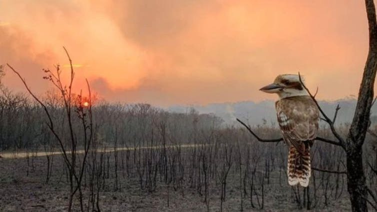 when the world catches on fire, how do predators respond?