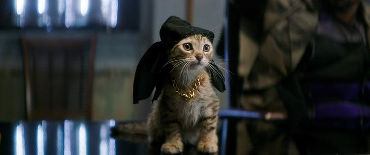 The 5 best films for cat lovers (that aren't the movie Cats)