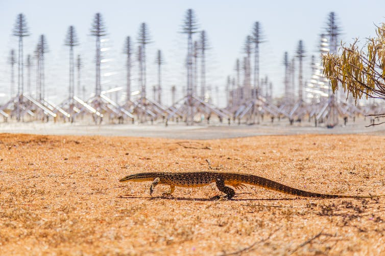 A lizard walking in front of the telescope equipment.