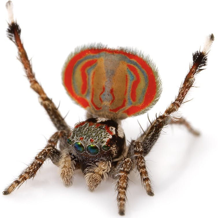 Don't like spiders? Here are 10 reasons to change your mind