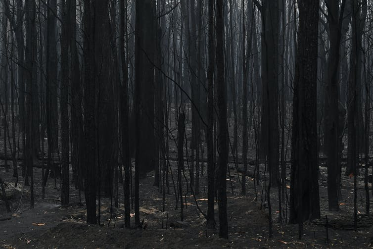 Bushfires threaten drinking water safety. The consequences could last for decades