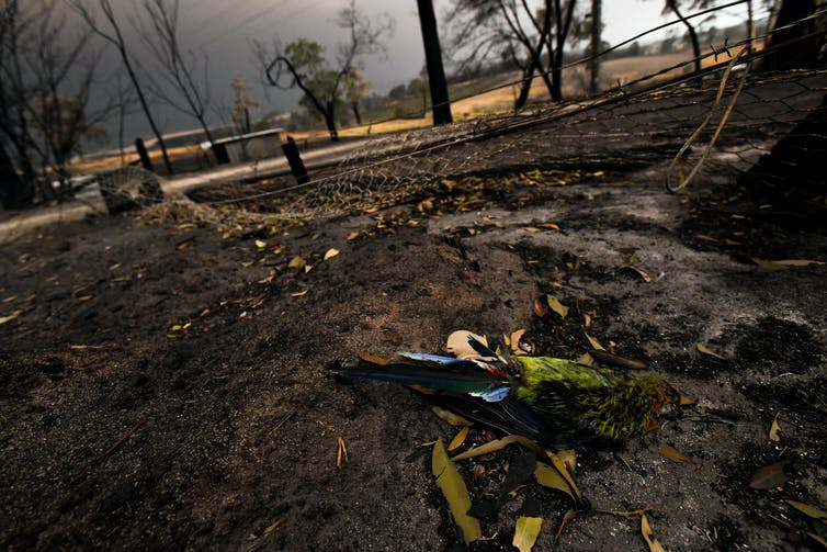 Animal response to a bushfire is astounding. These are the tricks they use to survive