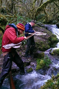 Collecting aquatic insects in Oregon.