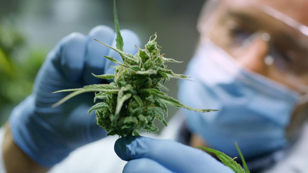 Мозга марихуана польза для конопля картинки скачать