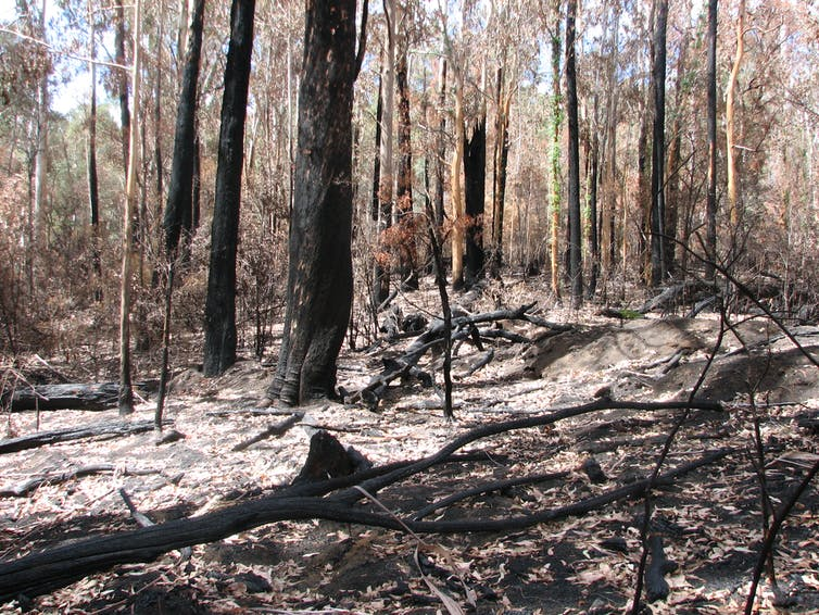 The sweet relief of rain after bushfires threatens disaster for our rivers