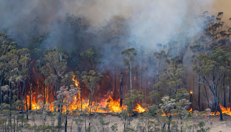 You're not the only one feeling helpless. Eco-anxiety can reach far beyond bushfire communities