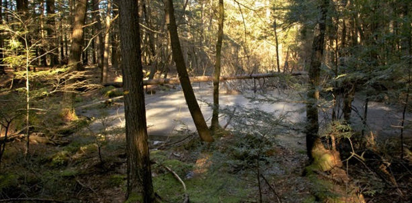 Native people did not use fire to shape New England's landscape