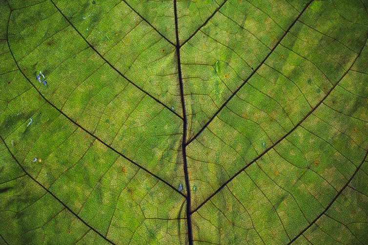 Close up photo of leaf
