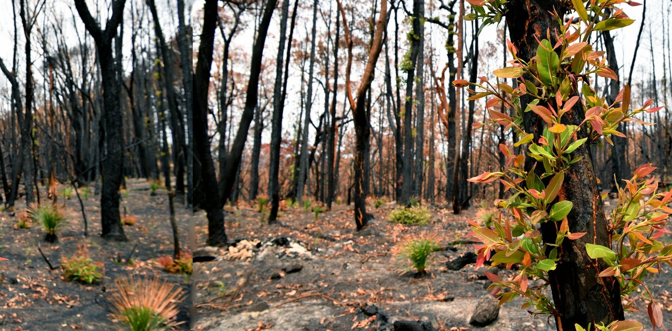 With costs approaching $100 billion, the fires are Australia's costliest natural disaster