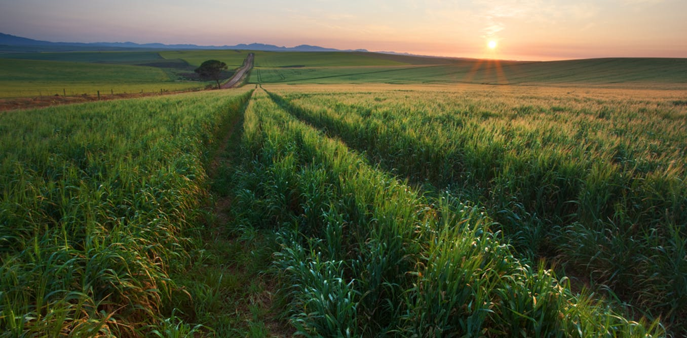 Pasha 50: The threat of climate change to South Africa's agriculture