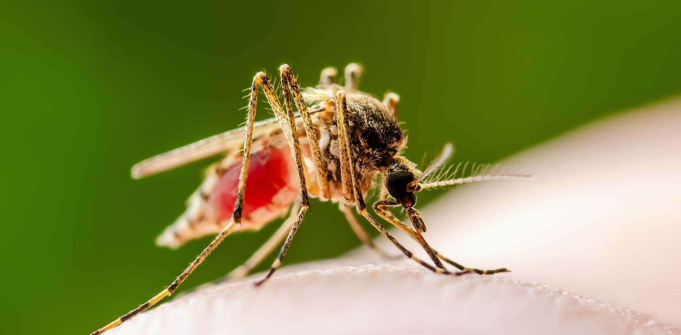 Heavy rains put Kenya at risk of mosquito-borne diseases