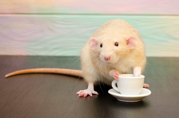 Efectos del café en el cuerpo