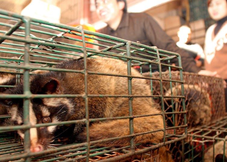 coronavirus wildlife market