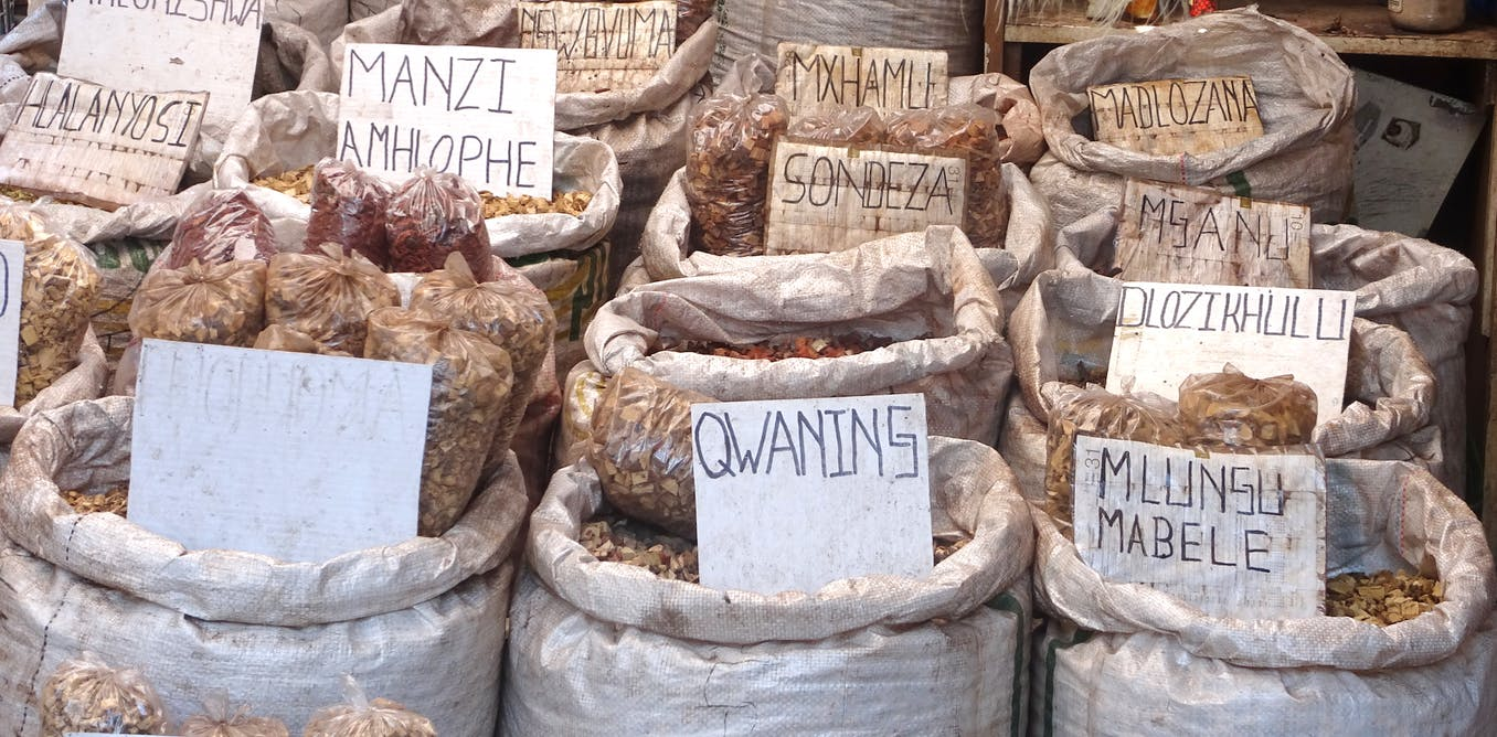 The story of the pharma giant and the African yam