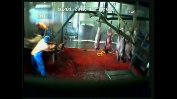 Animals suffer for meat production