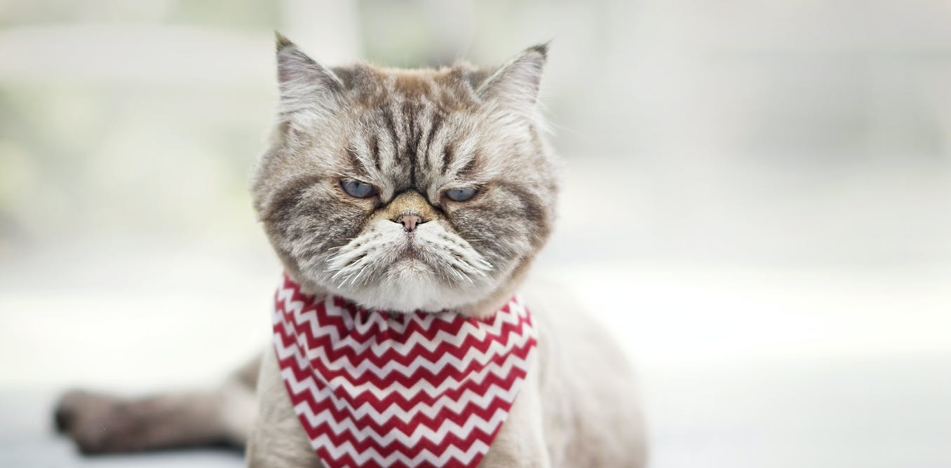 Are you a cat whisperer? How to read Fluffy's facial expressions