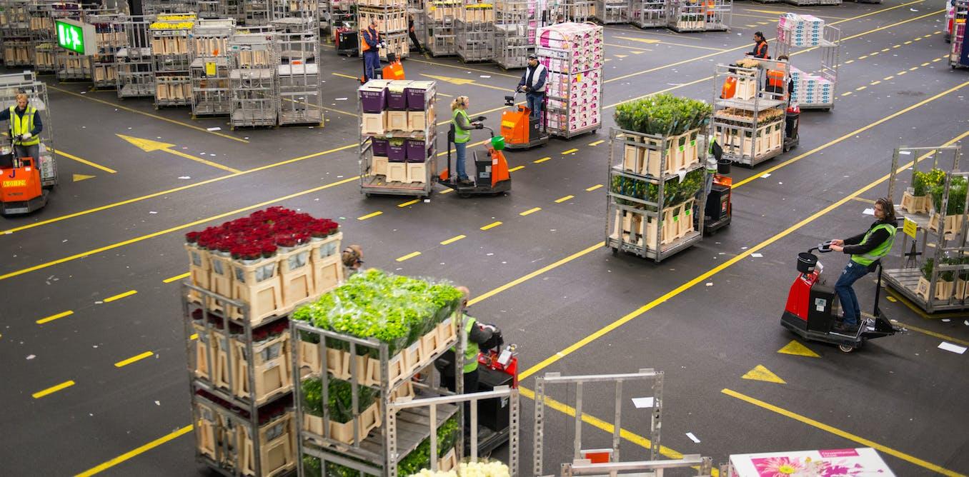 El comercio global de plantas amenaza la salud de los bosques