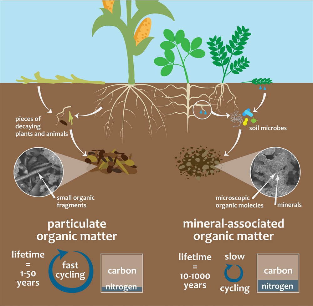 Soil carbon is a valuable resource, but all soil carbon is not created equal