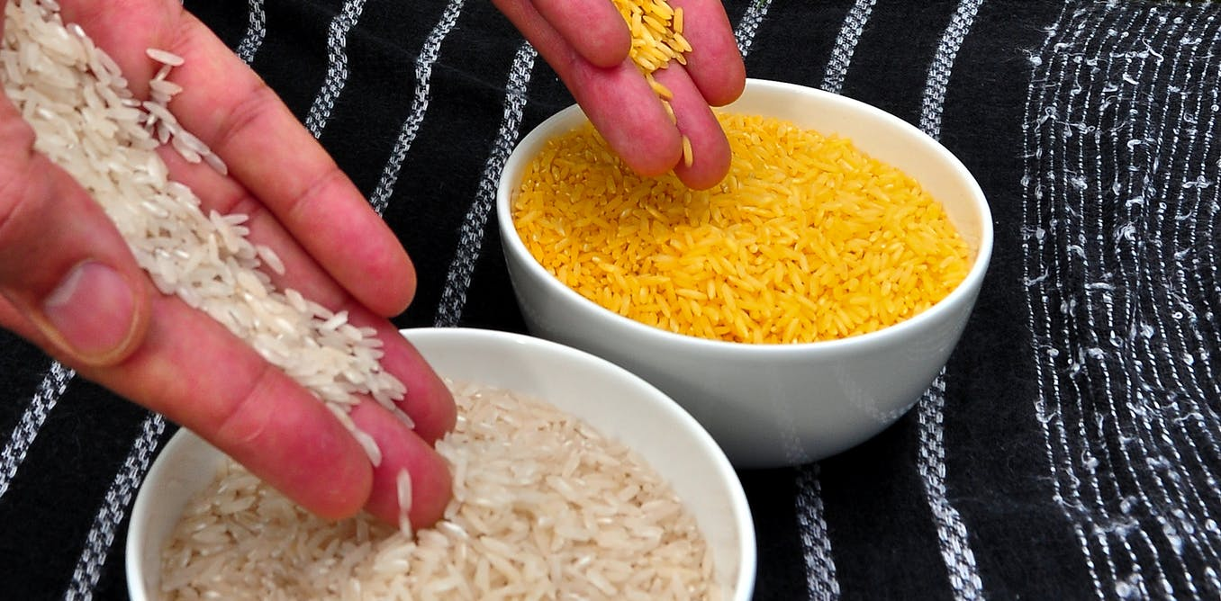 The Philippines has rated 'Golden Rice' safe, but farmers may not plant it