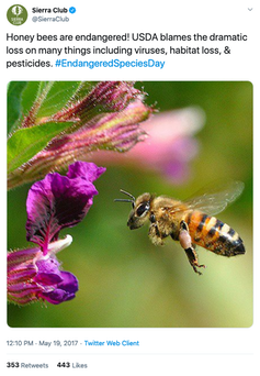 Tweet from May 19, 2017 from the Sierra Club, a US-based environmental preservation organization highlighting the 'endangered' honey bee. SierraClub/Twitter