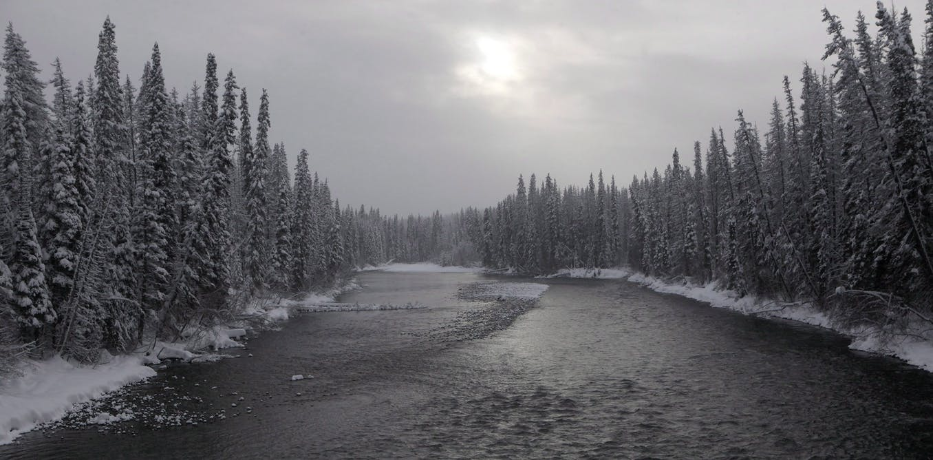 Wet'suwet'en: Why are Indigenous rights being defined by an energy corporation?