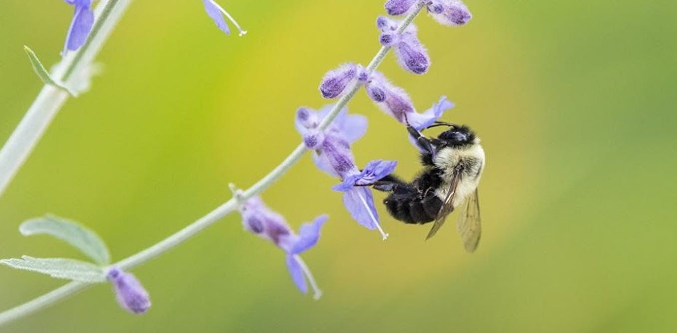 'Bee-washing' hurts bees and misleads consumers