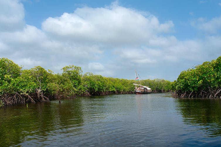 South African Mangroves