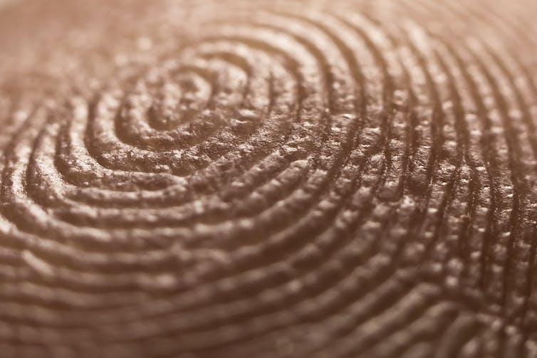 How did I get my own unique set of fingerprints?