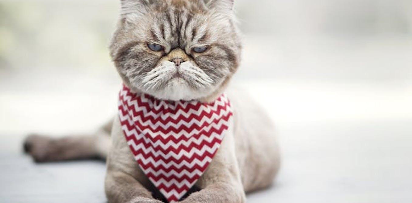 Apakah Anda ahli soal kucing? Ini cara membaca raut muka kucing