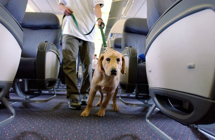Service dog or pet? Stephen Chernin/Getty Images