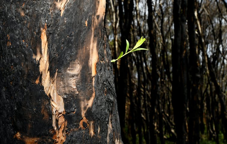 These plants and animals are now flourishing as life creeps back after bushfires