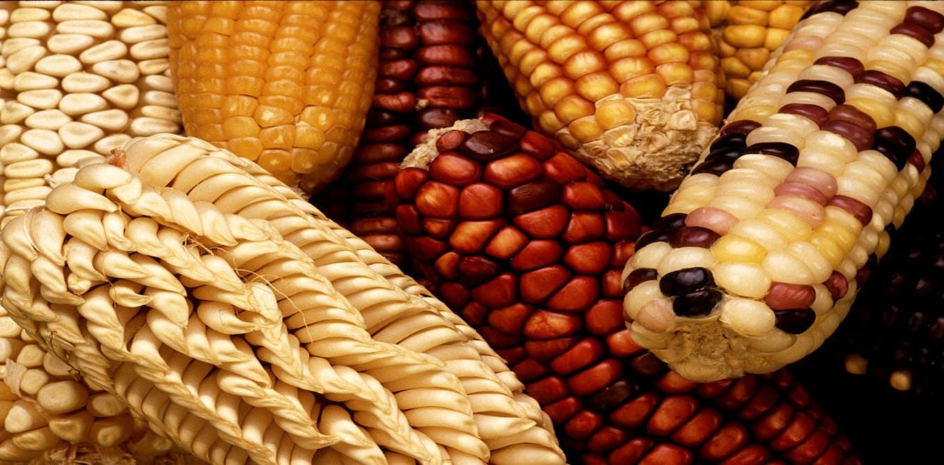 Persuasive speech on genetically modified foods