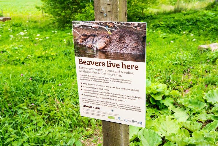 beaver river otter