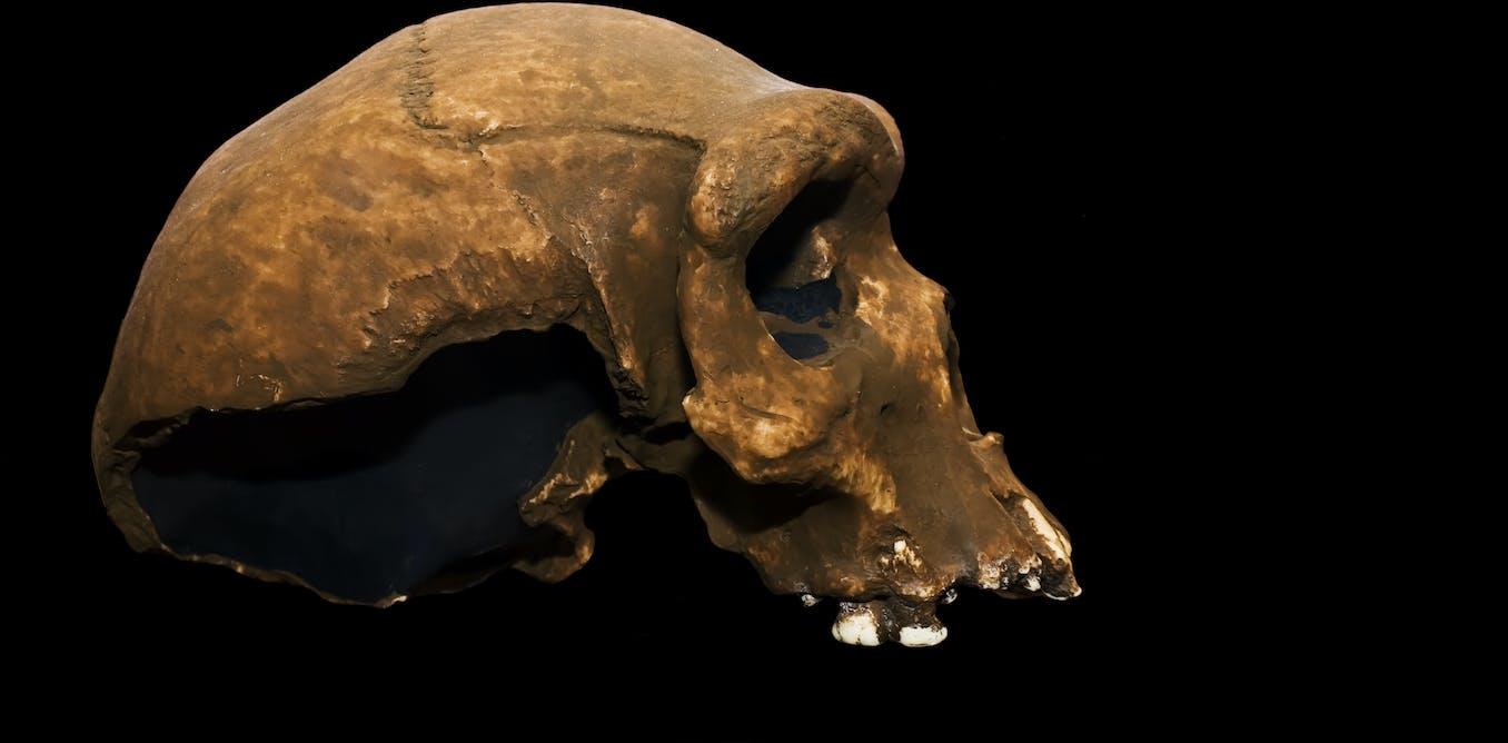 Les premiers humains se sont peut-être croisés avec une espèce mystérieuse et éteinte