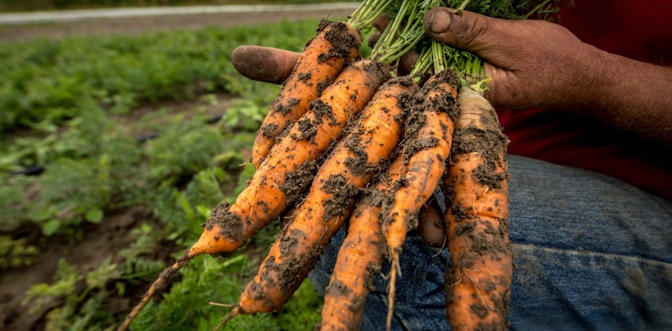 Malgré le succès du bio, des travailleurs confrontés à la pénibilité et à l'incertitude