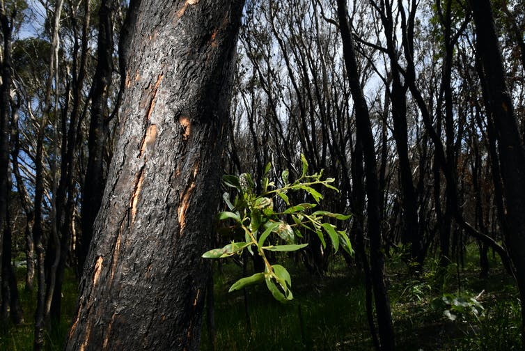 Logging is due to start in fire-ravaged forests this week. It's the last thing our wildlife needs