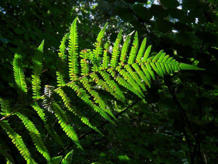 The leaf of a fern.