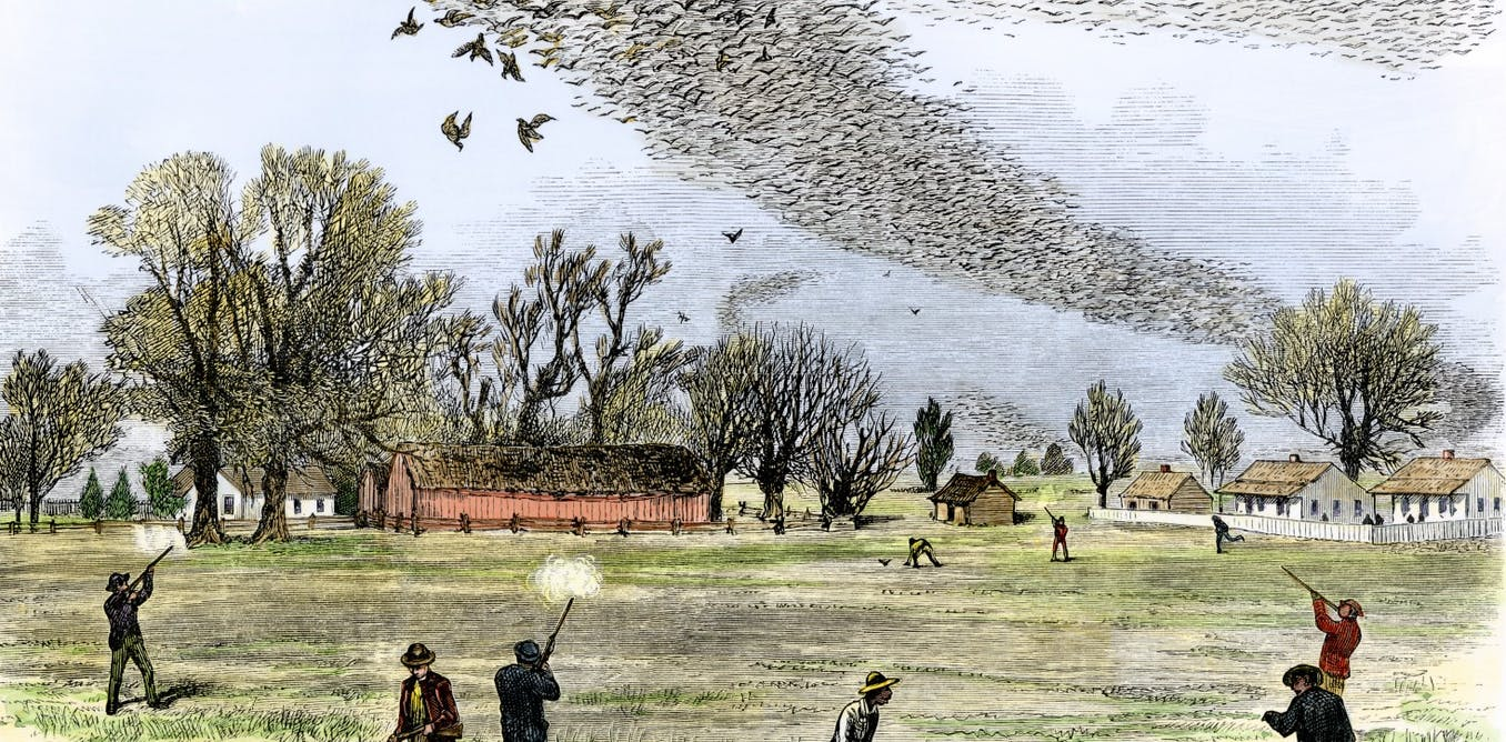 Why passenger pigeons went extinct a century ago