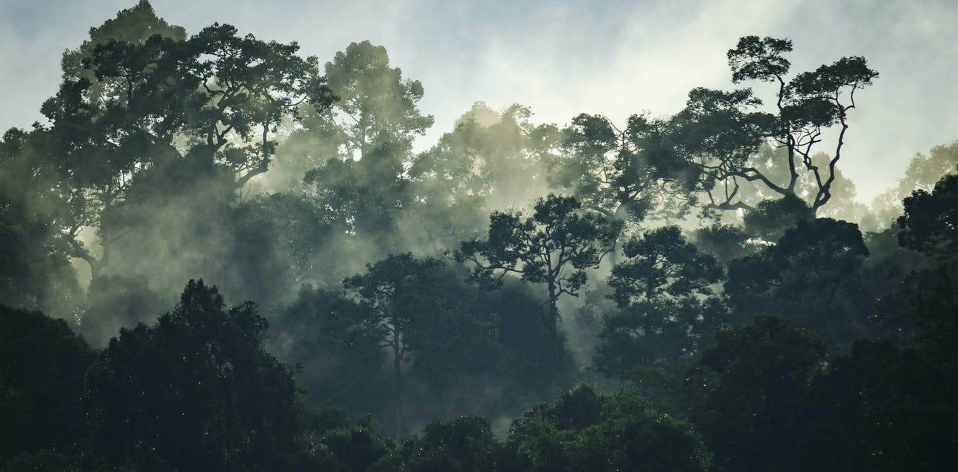 We tracked 300,000 trees only to find that rainforests are losing their power to help humanity