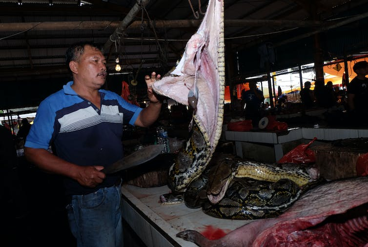 A vendor slicing up a large snake at an Indonesian market, where they offer exotic fare that includes bats and rats.Getty Images / Ronny Adolof Buol / AFP