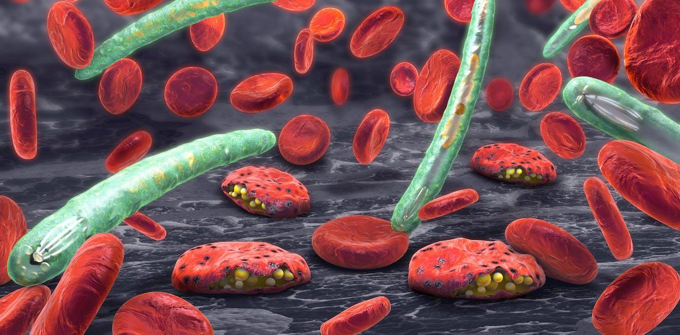 Los fármacos contra la malaria, nueva baza contra el COVID-19