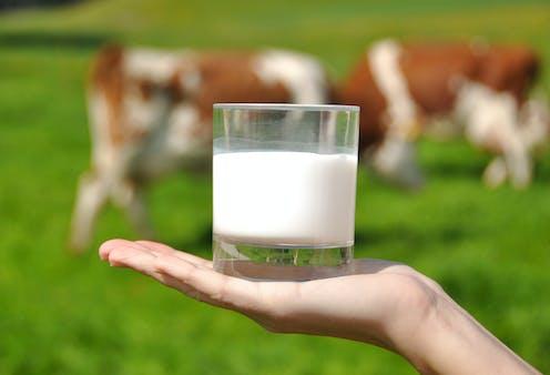 cual es la leche de vaca mas saludable