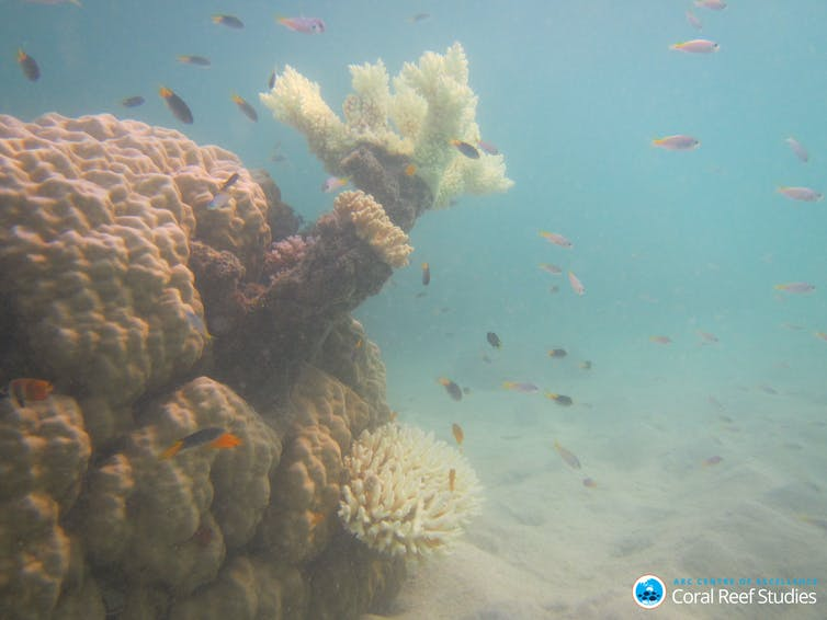 I studied what happens to reef fish after coral bleaching. What I saw still makes me nauseous