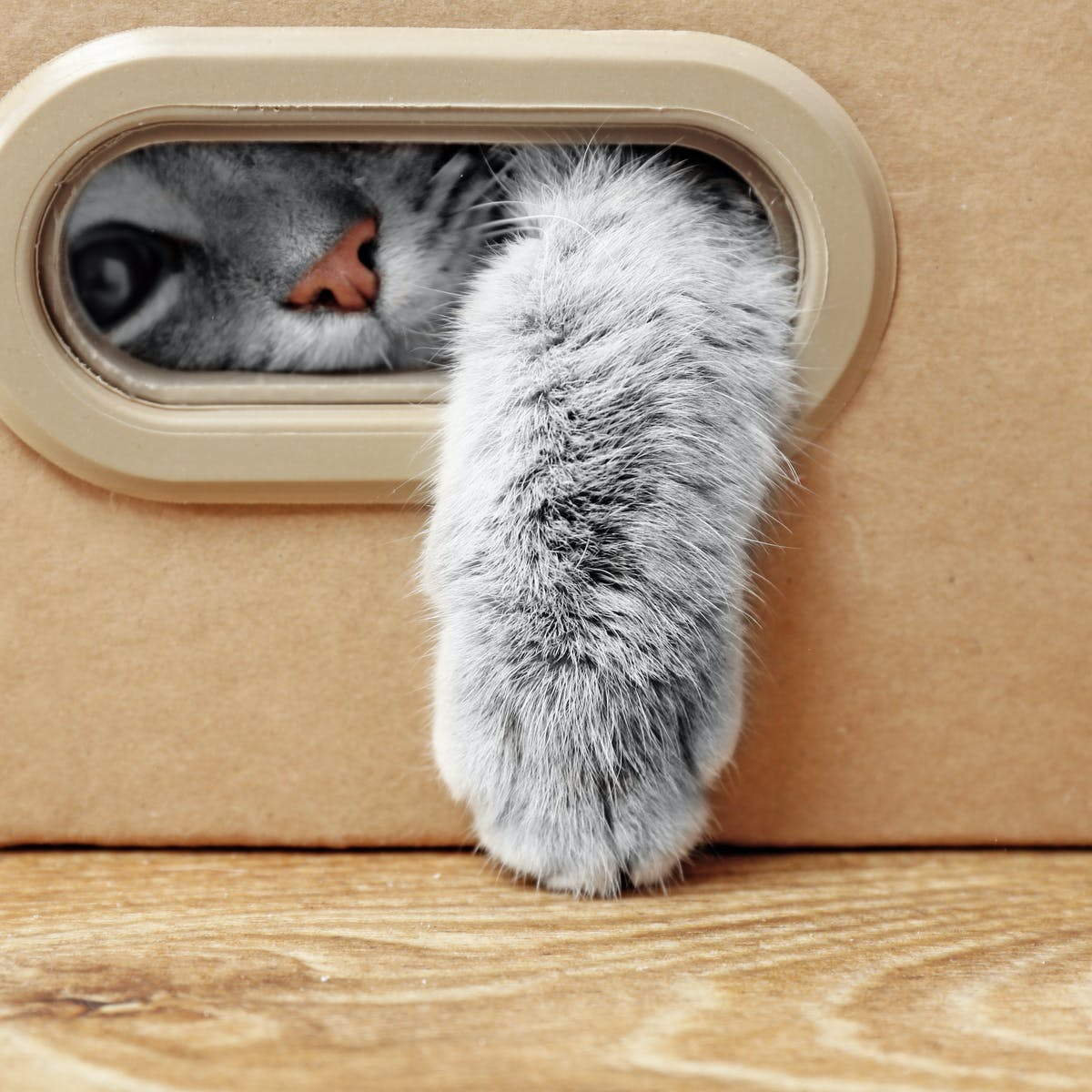 Can Cats Really Get Or Pass On Covid 19 As A Report From Belgium Suggests