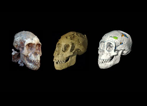 Baby steps: this ancient skull is helping us trace the path that led to modern childhood