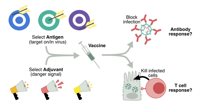 Where are we at with developing a vaccine for coronavirus?