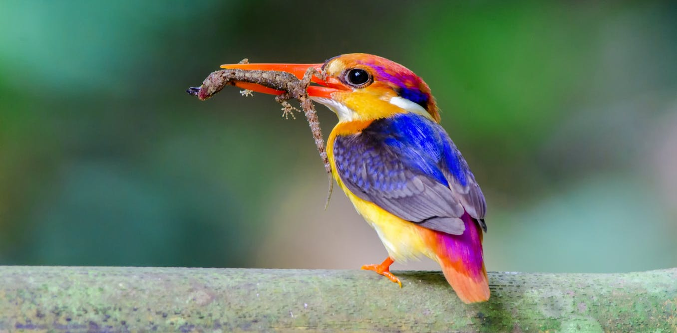 Climate change could cause abrupt biodiversity losses this century