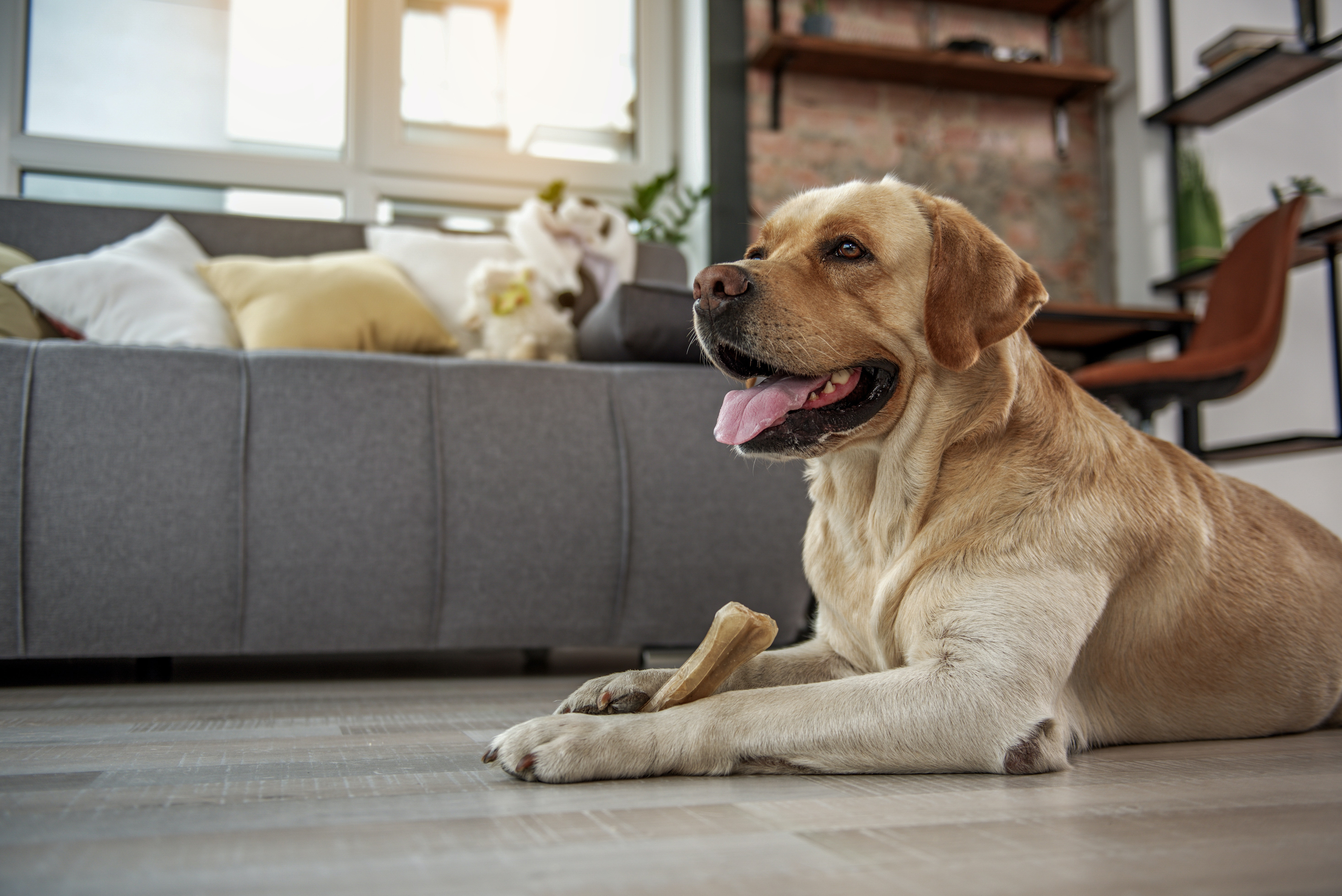 Abuse And Abandonment Why Pets Are At Risk During This Pandemic